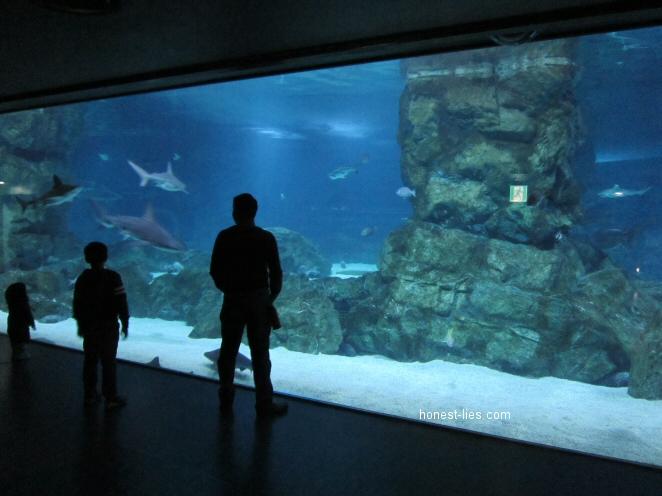 Shark viewing at COEX